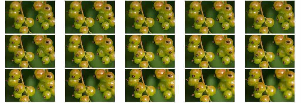 The 15 unripe-red-currant images with different focus that make up the final stacked image at the top of the article.